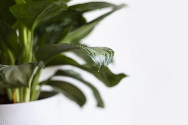 Как пересаживать комнатные растения, чтобы никто не умер?