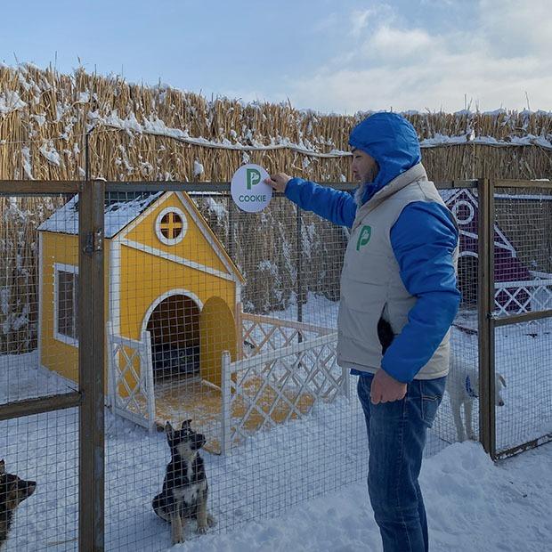 PetVille: Что происходит в деревне для собак, основатели которой собирают 128 миллионов тенге — Ситуация на The Village Казахстан