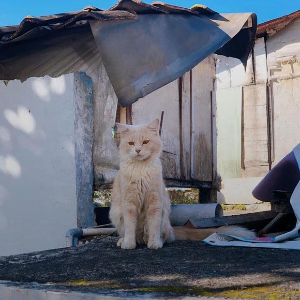 7 приютов для животных в Алматы — Добро в городе на The Village Казахстан