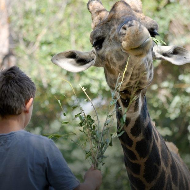 Что происходит в алматинском зоопарке? — Ситуация на The Village Казахстан