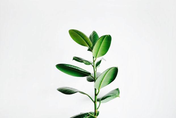 Цветы в интерьере: Как выбрать растение в квартиру? — Дизайн-хак на The Village Казахстан