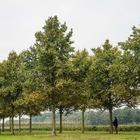Приложение о деревьях запустили в Алматы