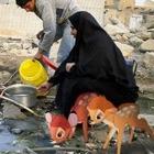Художник из Ирака совмещает героев мультфильмов и трагичные фото своей страны
