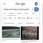 Google теперь предупреждает о фейковых фотографиях