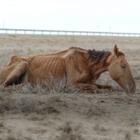 Зарубежные СМИ написали о засухе в Казахстане