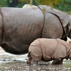 Животные могут развивать собственную культуру и традиции