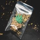 Ученые вывели новый сорт марихуаны, убивающий раковые клетки