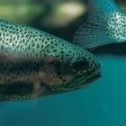 70 тонн мертвой рыбы нашли в озере под Алматы: Возбуждено уголовное дело