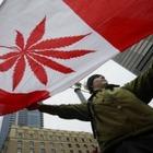 Канада официально легализовала марихуану
