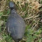 Немецкие саперы выехали обезвреживать гранату, но это оказалась секс-игрушка