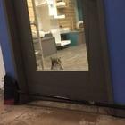 Техасский кот выпускал других кошек из клеток. Его заперли в одиночной камере