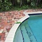 Застывшие игуаны падают с деревьев во Флориде