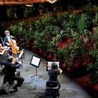 Оперный театр в Барселоне провел концерт перед двумя тысячами растений в горшках