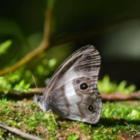 В Боливии открыли двадцать новых видов животных и растений