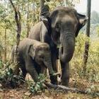 На Шри-Ланке запретили управлять слонами в нетрезвом виде