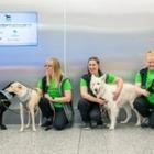 Собаки проверяют пассажиров на COVID-19 в аэропорту Хельсинки