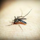 Устройство для подсчета комаров предложили установить в Павлодаре