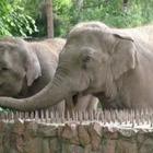 Зоопарк Алматы подал в суд на интернет-пользователей