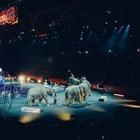 Цирки с дикими животными запретили в Париже