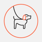 На вакцинацию домашних животных в Астане выделили 22 миллиона тенге