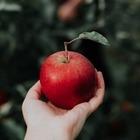 Праздник урожая яблок Alma Music пройдет 16 октября
