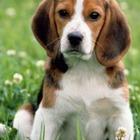 Законопроект об охране животных внесут на рассмотрение в Мажилис