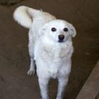 В Алматы можно будет выбрать собаку по ауре