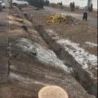 На Толе би произошла массовая вырубка деревьев. Без разрешения акимата