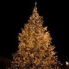 В Алматы не будет новогоднего салюта, а елки установят старые