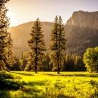 Вырубка лесов повысит шанс вымирания человечества на 90 %