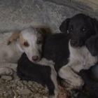 «Деньги выделяют не на содержание, а на отлов и уничтожение», — управление ветеринарии Тараза