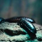 В зоопарке таракана назовут именем вашего бывшего партнера и скормят животному