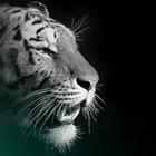 Туранского тигра хотят возродить в Казахстане