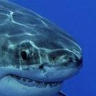 Группа KISS провела концерт для белых акул, но они не приплыли