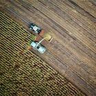 Запрет на продажу земель иностранцам: Сенат внес поправки