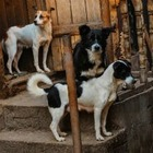 В Алматы умерла хозяйка приюта, после чего 150 собак остались одни