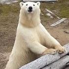 Студенты из Петропавловска совершили экспедицию в Арктику