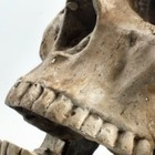 Дорогу в Иркутской области засыпали песком с костями и черепом