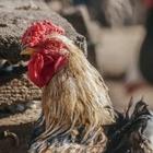 Казахстан ввел ограничения на границе с Россией из-за птичьего гриппа