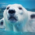 Алматинцы обеспокоены отсутствием белого медведя Алькора из алматинского зоопарка