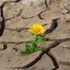 Погода на июнь: Синоптики ожидают сильную засуху в Казахстане
