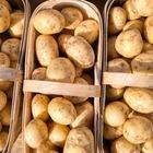 За сколько сейчас можно купить картошку и морковку в Алматы