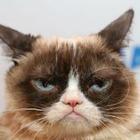 Умерла знаменитая Grumpy Cat