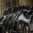 Ученые обнаружили новый вид динозавра с шипами и мехом