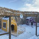 В Алматы появилась деревня для собак. А еще приложение, через которое за питомцами можно наблюдать