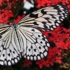 Ученые вернулись в прошлое и выяснили, что «эффекта бабочки» не существует