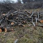 Почему в Алматы вырубят еще 1 649 деревьев?