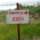 В селе Акмолинской области объявили карантин из-за сибирской язвы