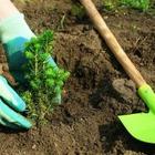 Будут ли сажать деревья сотрудники Sulpak? Акимат предлагает это сделать гражданам