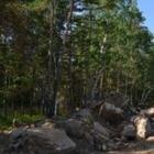 В Боровом повредили деревья из-за строительства водопровода